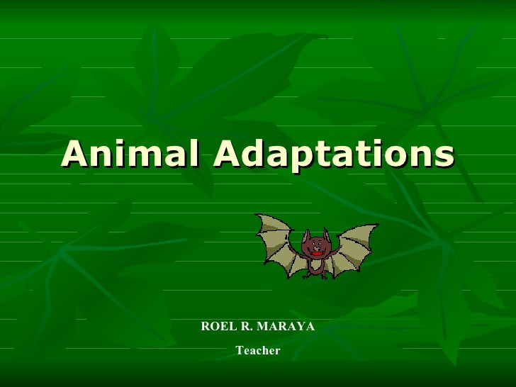 Animal Adaptations ROEL R. MARAYA Teacher