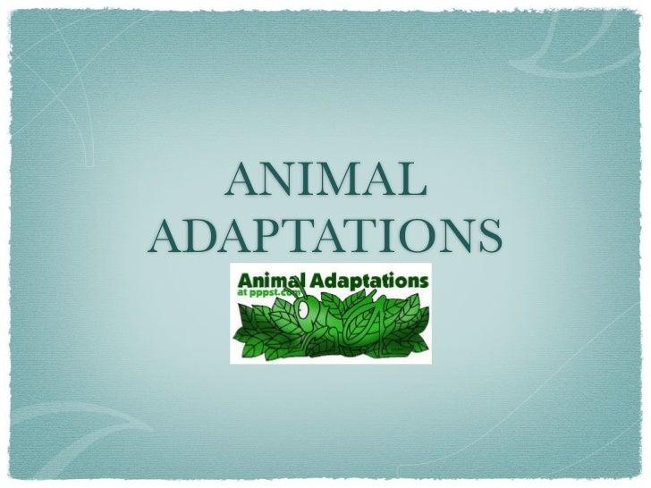 ANIMALADAPTATIONS