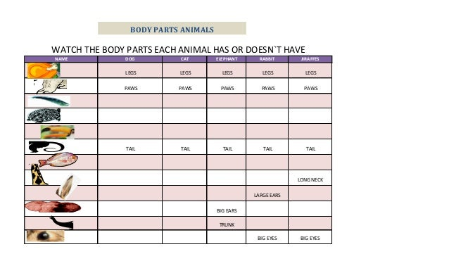 BODY PARTS ANIMALSWATCH THE BODY PARTS EACH ANIMAL HAS OR DOESN`T HAVENAME           DOG        CAT        ELEPHANT     RA...