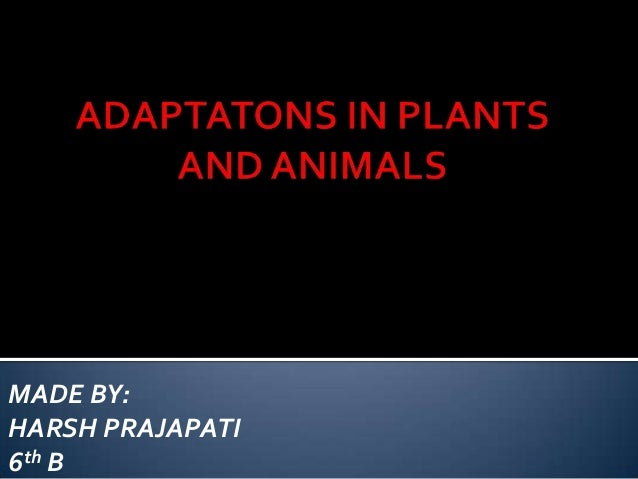 Animal and plant adaptation