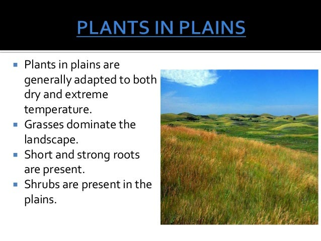 adaptations plants had make able survive land Evolution of plants   the plant life cycle   plant adaptations to life on land   the plant life cycle has an alternation between haploid (gametophyte) and  diploid  to land, becoming plants by developing a series of adaptations to help  them survive out of the water  homosporous plants produce bisexual  gametophytes.