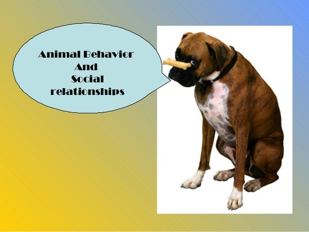Animal Behavior       And      Social  relationships