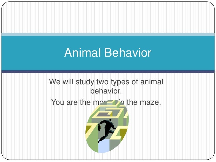 Animal Studies and School Project Ideas - ThoughtCo