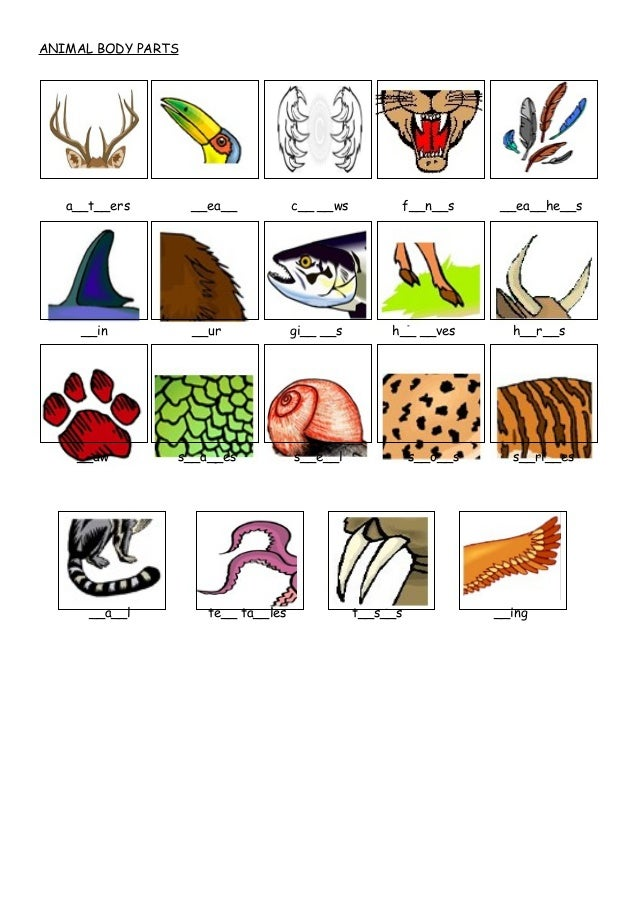 Animal Parts of Body Animal Body Parts A__t__ers