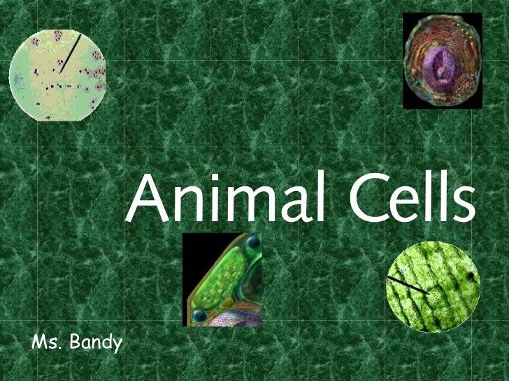 Animal CellsMs. Bandy