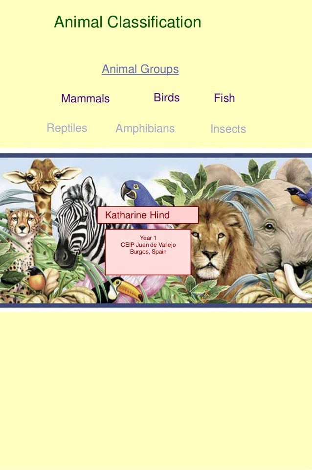 Animal Classification           Animal Groups  Mammals                Birds       FishReptiles     Amphibians             ...