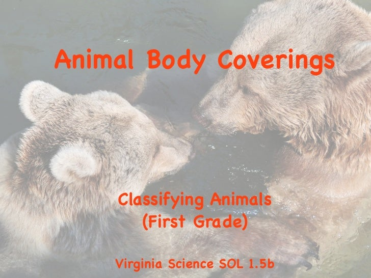 Animal Body Coverings    Classifying Animals       (First Grade)    Virginia Science SOL 1.5b