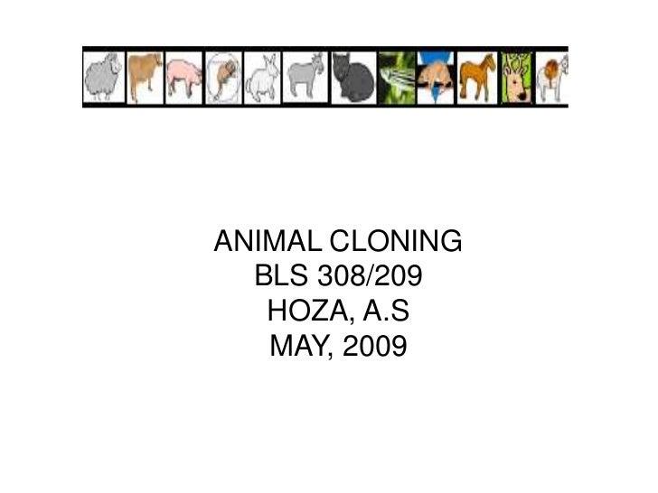 ANIMAL CLONINGBLS 308/209HOZA, A.SMAY, 2009<br />