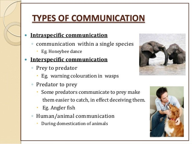 essay on difference between human and animal communication Human and non-human communication at least, the just noticeable difference in pitch perception is about an order of magnitude smaller for humans than for other mammals the patterns of animal communication seem to be largely.