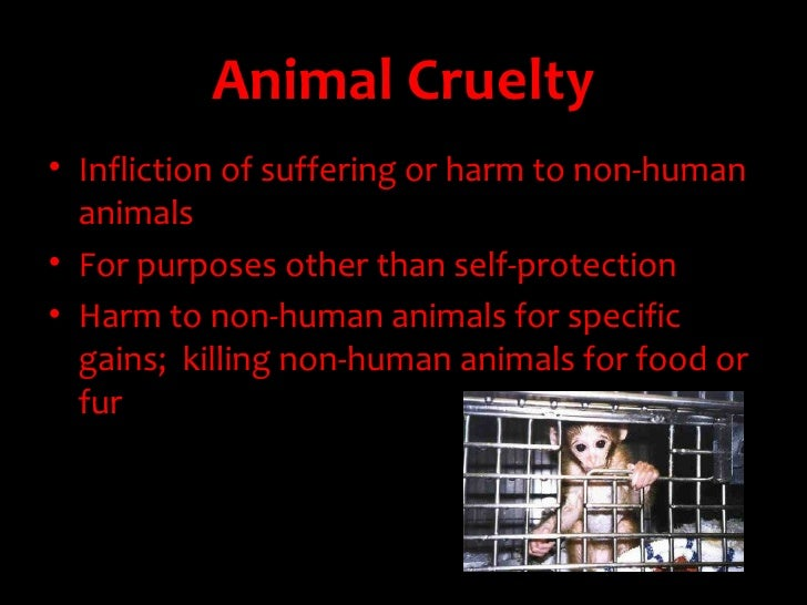 animal cruelty speech Children who live in homes where animal abuse is present are often abused themselves and unfortunately, sometimes carry on with the cycle of abuse later on in life.