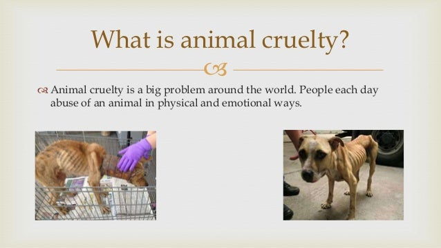research paper ideas animal cruelty Free animal cruelty papers, essays, and research papers my account search results free essays this definition is presented in a paper written by learning to.