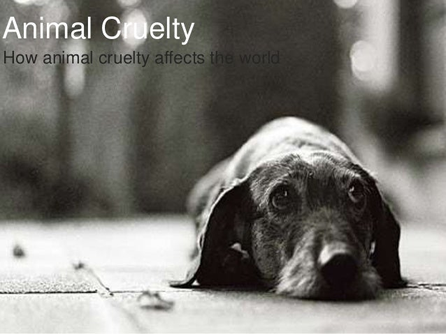 Animal CrueltyHow animal cruelty affects the world