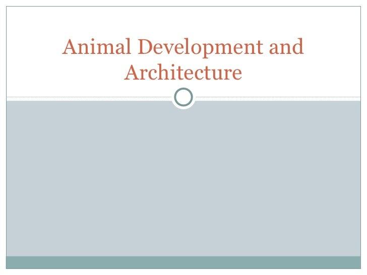 Animal development and architecture