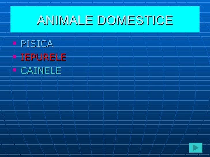 ANIMALE DOMESTICE <ul><li>PISICA </li></ul><ul><li>IEPURELE </li></ul><ul><li>CAINELE </li></ul>