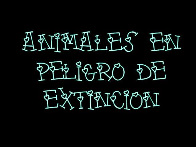 El Lince es uno de los animales protegidos en la caza ya que su extinción con eltranscurso del tiempo se ha ido notando. V...