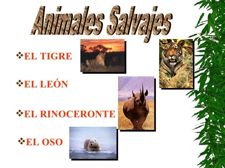 Animales Salvajes <ul><li>EL TIGRE </li></ul><ul><li>EL LEÓN </li></ul><ul><li>EL RINOCERONTE </li></ul><ul><li>EL OSO </l...