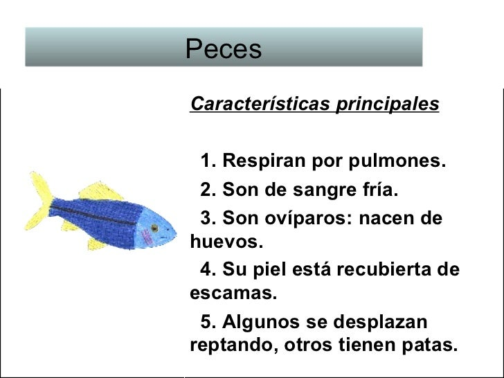 Tipos de animales y sus caracter sticas for Como se cultivan los peces