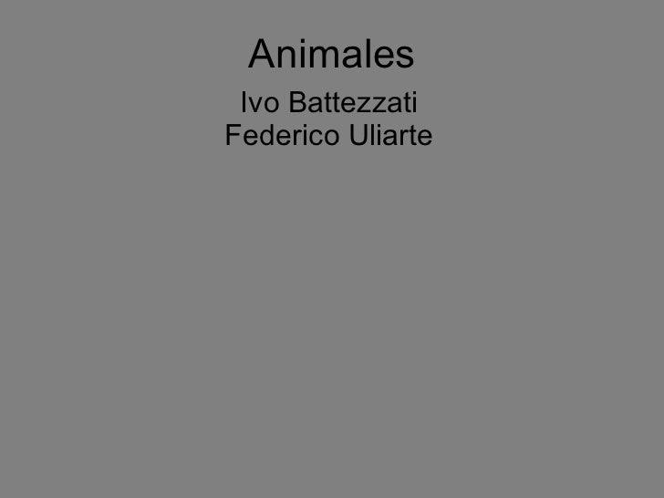 Animales Ivo Battezzati Federico Uliarte