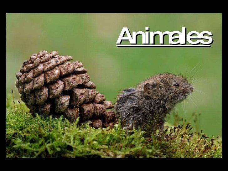 Animales 1203975712825028-3