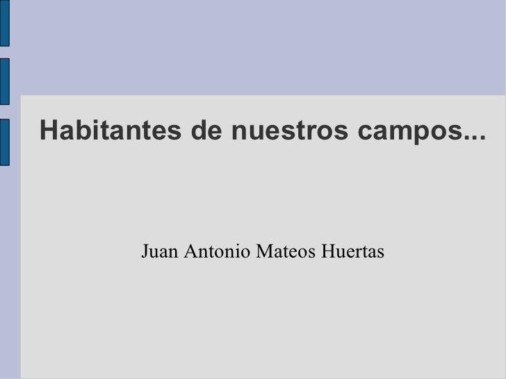 Habitantes de nuestros campos... Juan Antonio Mateos Huertas