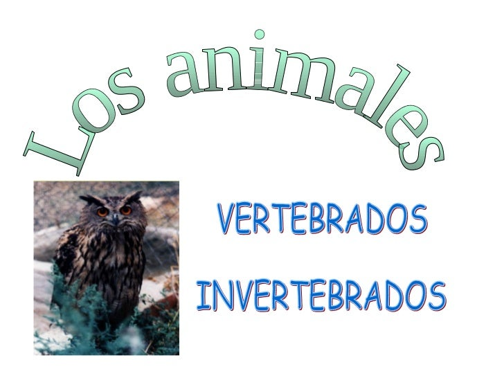 Los animales VERTEBRADOS INVERTEBRADOS