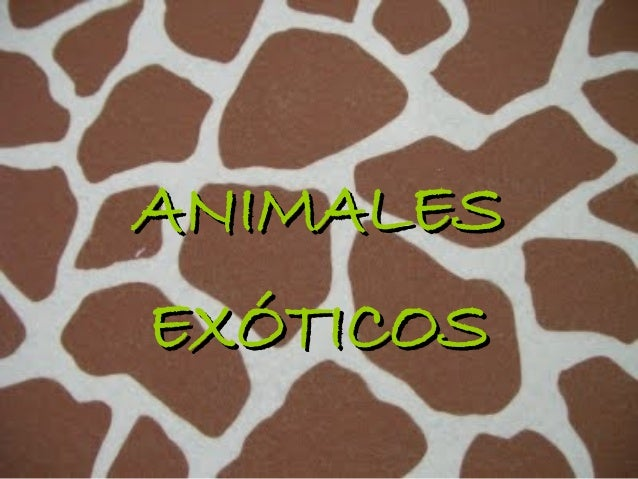 ANIMALESEXÓTICOS