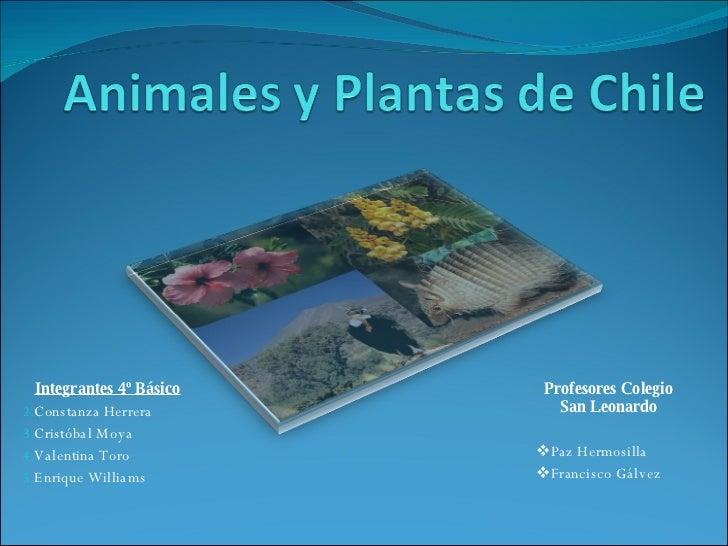 Animales Y Plantas De Chile 2003