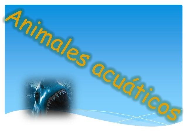 Se deben distinguir entre los animales que puedenaprovechar para la respiración el oxígeno disuelto en elagua y los que ne...