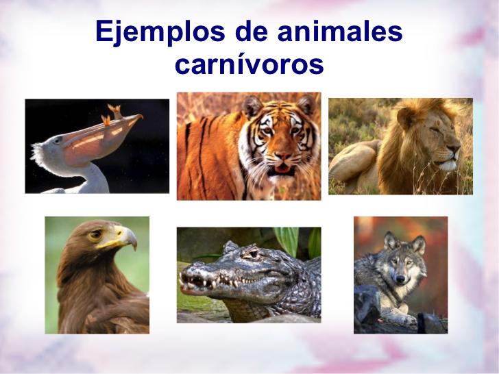 carnivoros-herviboros- ...