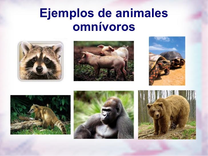 Carnivoro herbivoro omnivoro - Imagui