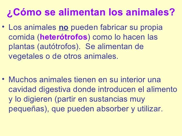 Animales ciclo - Como se aparean los elefantes ...