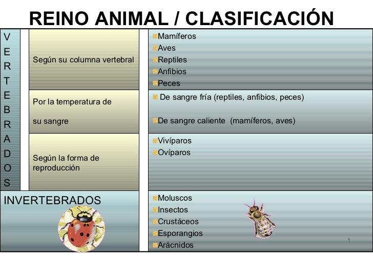 Animales clasificacion
