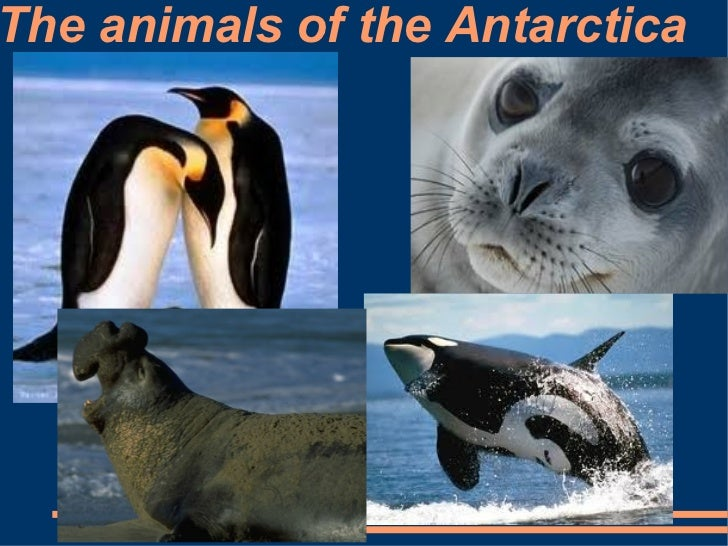 The animals of the Antarctica