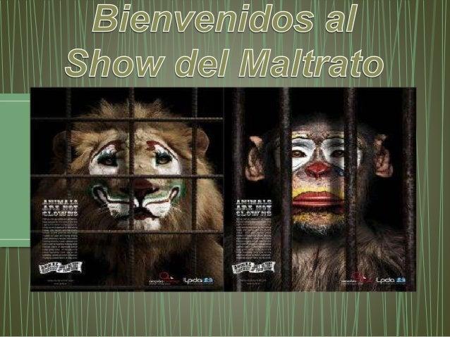 • La verdadera cara del circo, se esconde detrás de las coloridas carpas. Ahí donde no llegan las luces, decenas de animal...