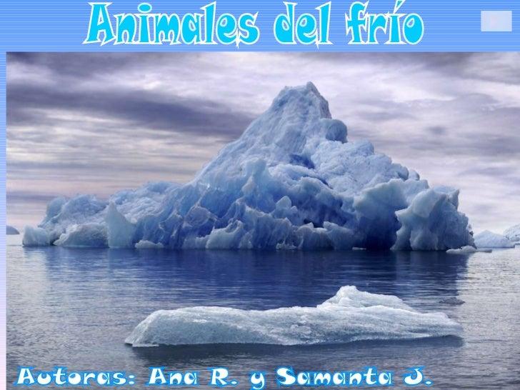 Animales del frío Autoras: Ana R. y Samanta J.