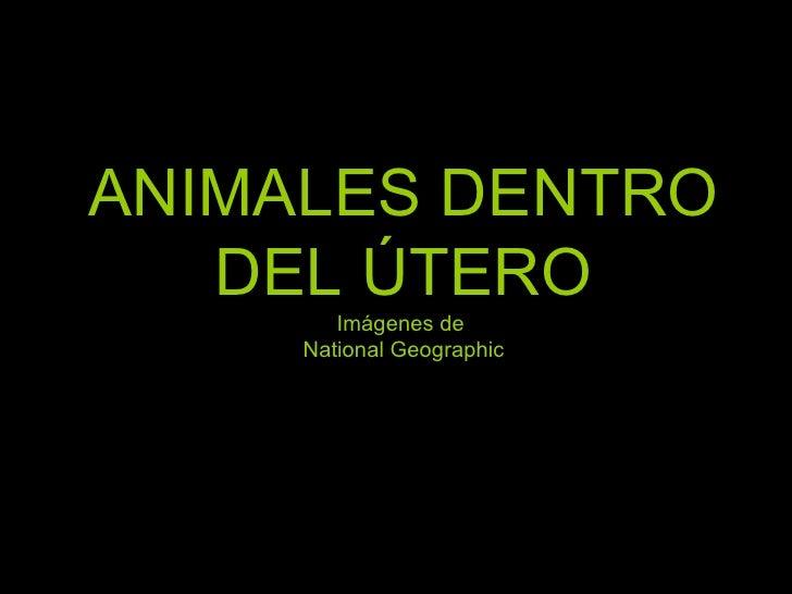 ANIMALES DENTRO DEL ÚTERO Imágenes de  National Geographic