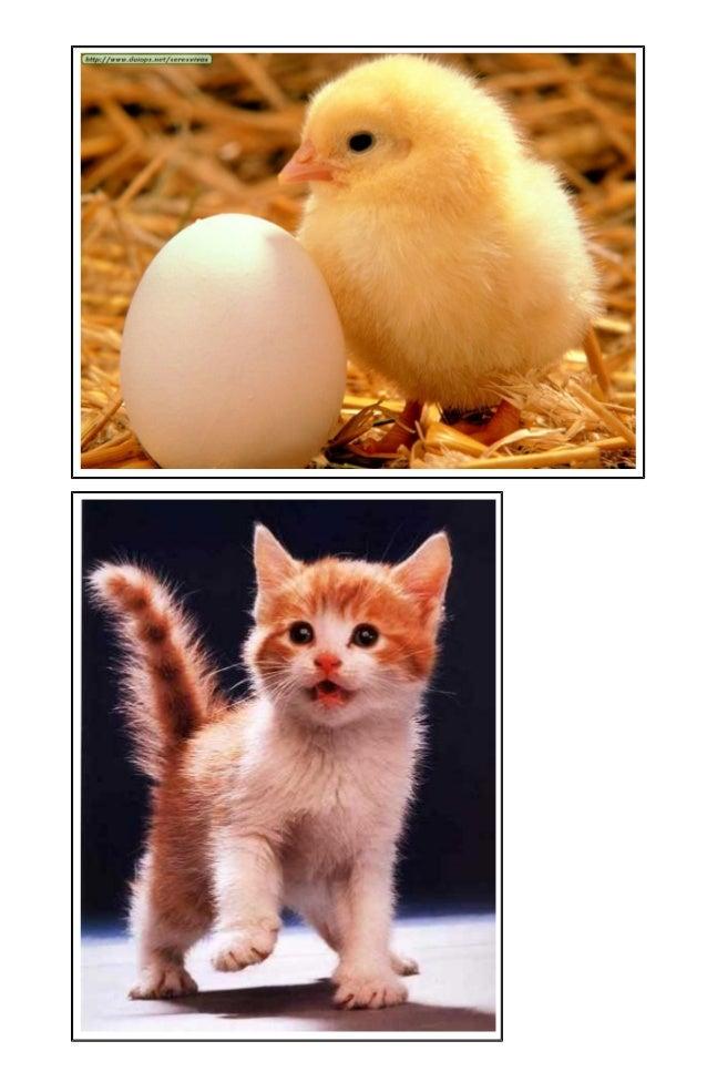 ANIMALESDOMESTICOS ANIMALES SALVAJES