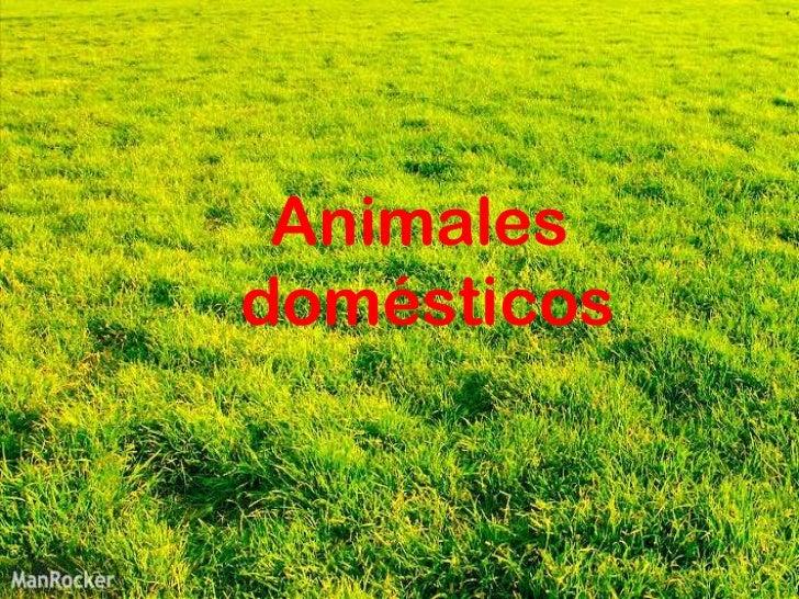 Animalesdomésticos
