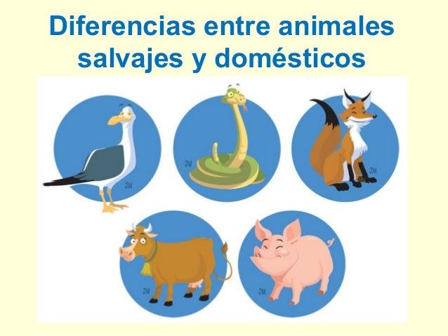 Diferencias entre animalessalvajes y domésticos