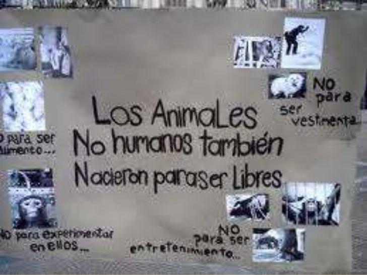 ANIMALES ENCAUTIVERIO     Prof.: Franklin Chavarría Bolaños
