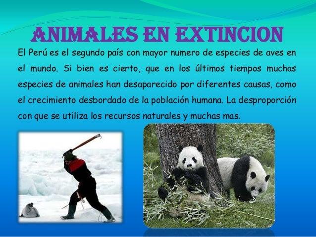 ANIMALES EN EXTINCION El Perú es el segundo país con mayor numero de especies de aves en el mundo. Si bien es cierto, que ...