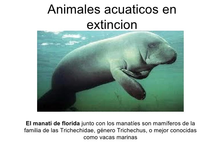 Animalesenextincion