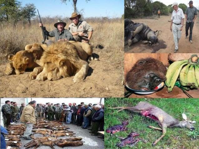 Resultado de imagen de caza descontrolada