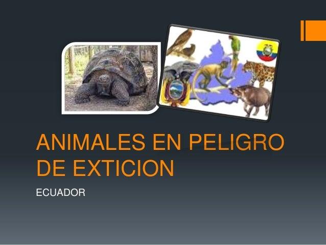 ANIMALES EN PELIGRODE EXTICIONECUADOR