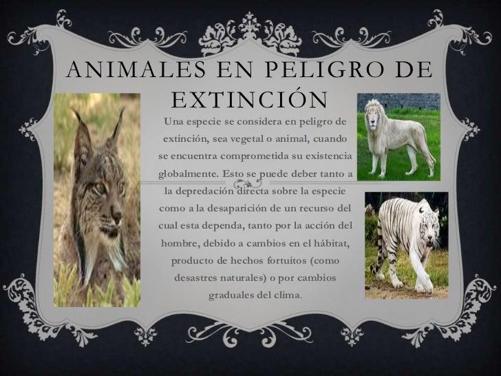 Animales en peligro de extinción<br />Una especie se considera en peligro de extinción, sea vegetal o animal, cuando se en...