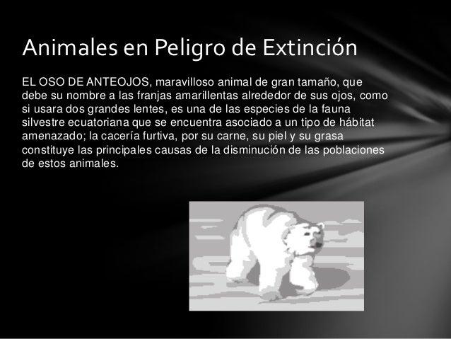 Animales en Peligro de ExtinciónEL OSO DE ANTEOJOS, maravilloso animal de gran tamaño, quedebe su nombre a las franjas ama...