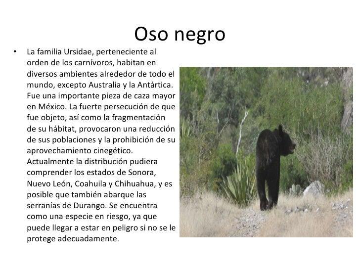 animales en peligro de extinci n en nuevo le n