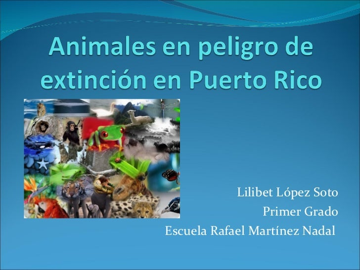 animales de puerto rico en peligro de extincion group