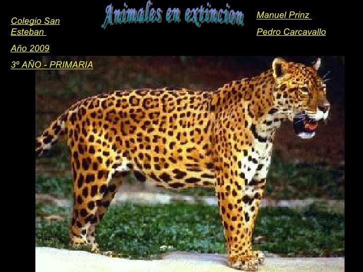 Animales en extincion Colegio San Esteban  Año 2009 3º AÑO - PRIMARIA Manuel Prinz  Pedro Carcavallo