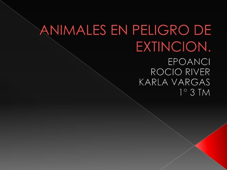  ESPECIESEN PELIGRO CAUSAS DE LA EXTINCION. LOS 10 ANIMALES CON MAS  PELIGRO LOS WOMBAT